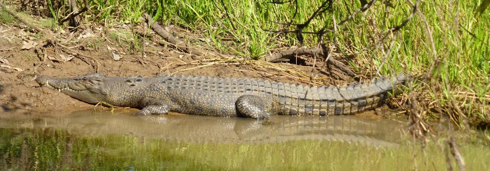crocdile-slide